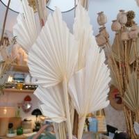 Palm Spear Blanco unidad