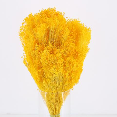 Brooms Amarillo