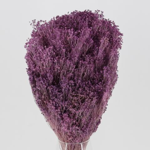 Brooms Lavanda