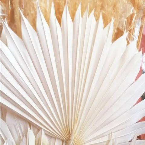 Palm Sun Blanco