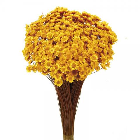 Glixia Amarillo